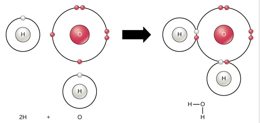 In the first image, an oxygen atom is shown with six valence electrons. Four of these valence electrons form pairs at the top and right sides of the valence shell. The other two electrons are alone on the bottom and left sides. A hydrogen atom sits next to each the lone electron of the oxygen. Each hydrogen has only one valence electron. An arrow indicates that a reaction takes place. After the reaction, in the second image, each unpaired electron in the oxygen joins an electron from one of the hydrogen atoms so that the valence rings are now connected together. The bond that forms between oxygen and hydrogen can also be represented by a dash.