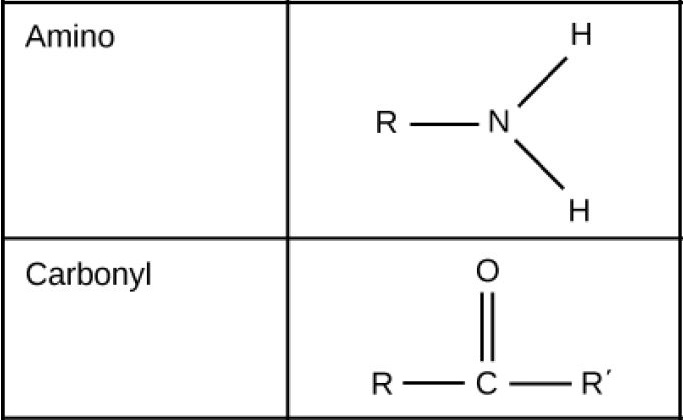 Carbonyl groups, which consist of an oxygen double bonded to a carbon in the middle of a hydrocarbon chain, are polar. Amino groups, which consist of two hydrogens attached to a nitrogen, are able to accept H positive ions from solution, forming H subscript 3 baseline positive. Amino groups are considered basic.