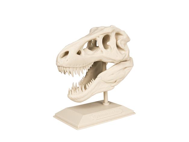 3D model of Dinosaur skull of Tyrannosaurus Rex.